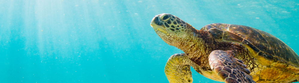 Turtle Splash: EnviroKidz Tells the Sea Turtle Story with an Incredible Product Launch Kit